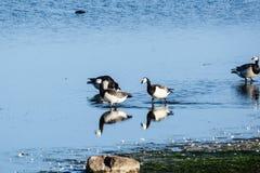 鸟的混合 免版税库存照片