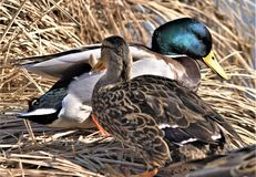 鸟的监视人在公园 免版税库存图片