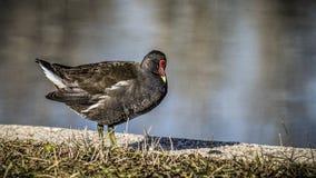 鸟的监视人在公园 免版税图库摄影