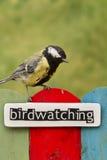 鸟的监视人的鸟在用词装饰的篱芭栖息 免版税库存图片