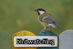 鸟的监视人的鸟在用词装饰的篱芭栖息 库存照片