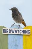 鸟的监视人的鸟在用词装饰的篱芭栖息 库存图片