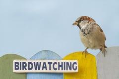 鸟的监视人的鸟在用词装饰的篱芭栖息 图库摄影