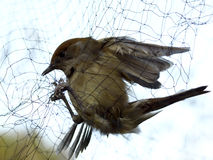 鸟的监视人 库存照片