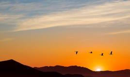 鸟的秋天或春天迁移 免版税库存照片