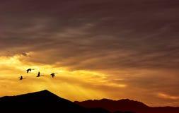 鸟的秋天或春天迁移 库存图片
