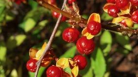鸟的莓果 库存照片