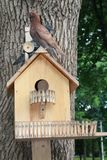 鸟的议院,人,鸽子-和平,自然的标志技巧  库存照片