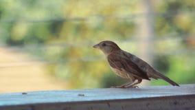 鸟的边 库存照片
