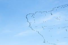 鸟的迁移 免版税图库摄影
