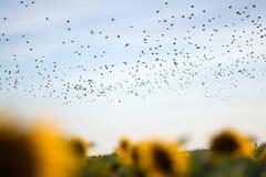 鸟的迁移 免版税库存图片