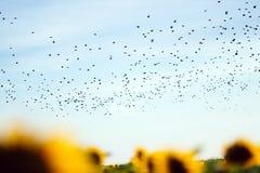 鸟的迁移 库存图片