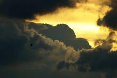鸟的飞行 免版税库存图片