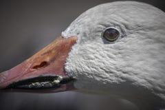 鸟的画象 库存图片