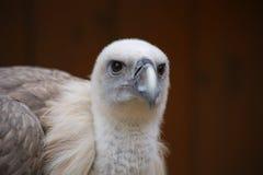 鸟的头 库存照片