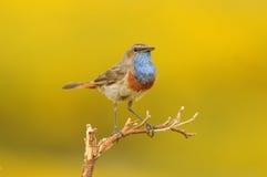 鸟监视唱歌 免版税库存图片