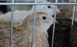 鸟看在笼子外面 图库摄影