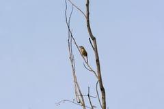 鸟看板卡问候例证安排唱歌您文本的向量 图库摄影