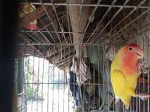 鸟看 免版税库存图片