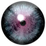 鸟眼睛 与紫色的动物眼睛上色了虹膜,细节视图到眼睛电灯泡里 图库摄影