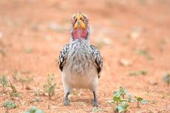 鸟眼睛 免版税库存图片