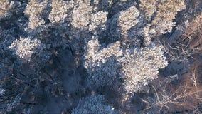 鸟瞰图与森林、树和多雪的峭壁的冬天snowscape 蓝天 33c 1月横向俄国温度ural冬天 股票视频