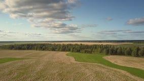 鸟瞰图在不尽的领域中的绿色森林在秋天 股票录像
