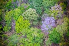 鸟瞰图森林 免版税库存图片