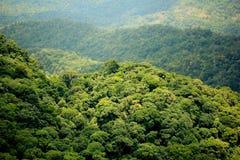 鸟瞰图森林 库存图片