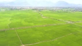 鸟瞰图米领域和山风景 绿色米在地平线视图的种植园在村庄和山从飞行 股票视频