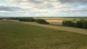 鸟瞰图绿色和黄色麦田反对森林 股票录像
