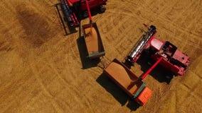 鸟瞰图联合收割机会集麦子在日落 收获粮田,庄稼季节 美丽的自然天线 股票录像