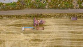 鸟瞰图联合收割机卸载在收获在农田的卡车的五谷麦子 组合卸载五谷  股票录像