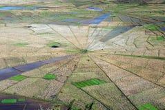 鸟瞰图蜘蛛网形状的米领域 库存照片