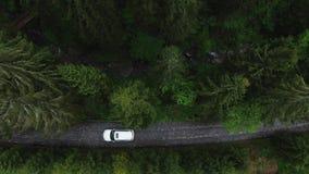 鸟瞰图驾车通过乡下公路的森林 白色SUV驾车空的路 影视素材