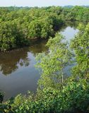 鸟瞰图,热带美洲红树沼泽地 库存图片