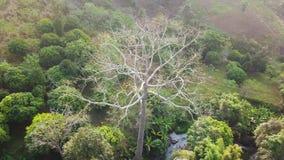 鸟瞰图,飞行在与美好的水秋天和绿色树背景的大树附近 股票视频