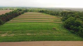 鸟瞰图:绿色山谷的全景与树和干草堆的 秋天横向 股票录像