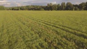 鸟瞰图:飞行在绿色领域 影视素材