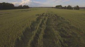 鸟瞰图:飞行在绿色领域 股票录像