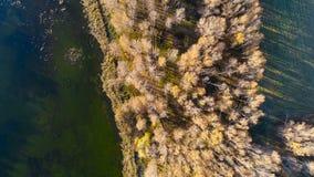鸟瞰图:黄色狂放的森林和水 影视素材