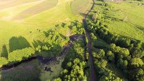鸟瞰图 日落 在的飞行绿色象草的岩石小山 俄国 美好的图象本质河夏天 股票录像