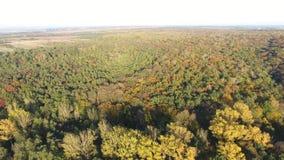 鸟瞰图 飞行在美丽的山河和美丽的森林空中摄影机射击 股票录像