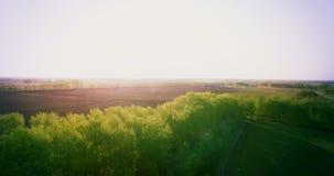 鸟瞰图 4k UHD 在绿色和黄色麦子农村领域的低飞行 免版税库存照片