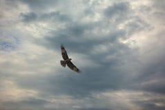 鸟祈祷 库存照片