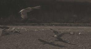 鸟祈祷 库存图片