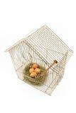 鸟笼局限的蛋嵌套 库存照片