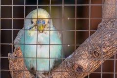 鸟笼 免版税库存图片