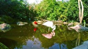 鸟类保护区在南非 影视素材