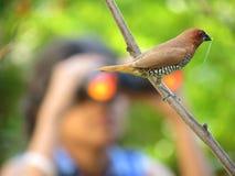 鸟类观看 免版税库存照片